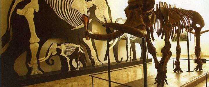 Il Museo Gemmellaro si rinnova con le installazioni virtuali